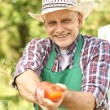 Gardener hold out apples — Stock Photo #76162613