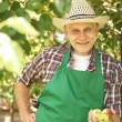 Gardener with fresh apples in hand — Stock Photo #76162781