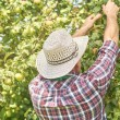 Gardener harvesting apples — Stock Photo #76162807