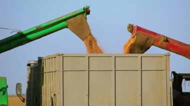 Harvesters are Unloading Grain into the Truck. Close-up — Stock Video