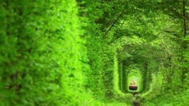 Técnico trem no túnel de árvores de folha caduca — Vídeo stock