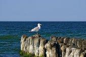 Seagull on the breakwater — Стоковое фото