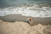 Dog at beach — Stock Photo