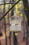Vintage birdcage hanging on tree branch, white candles inside — Stock Photo