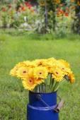 Bouquet of yellow gerbera daisies in blue bucket — Stock Photo