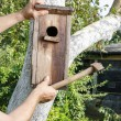 Bird house in the garden — Stock Photo #60182681