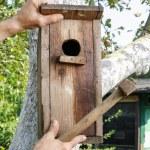 Bird house in the garden — Stock Photo #60182691