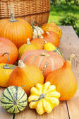 Pumpkins on wooden table in the garden — Stock Photo