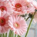 Bouquet of pink gerbera daisies — Stock Photo #60393461