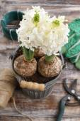 White hyacinth flowers and garden accessories — Stock Photo