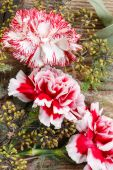 Red and white carnation flowers on wood — Stock Photo