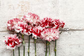 Red and white carnation flowers on wood — Stock fotografie