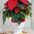 The poinsettia flower (Euphorbia pulcherrima) — Stock Photo #61101937