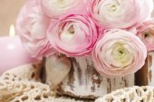 Pink persian buttercup flowers (ranunculus) — Stock Photo