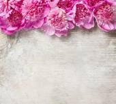 Stunning pink peonies on white rustic wooden background — Fotografia Stock