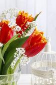 Lindas tulipas laranja e Gypsophila paniculata (respiração do bebê- — Fotografia Stock