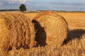 Two bales of hay on the stubble field — Stock Photo