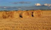 Bales of hay on the stubble field — Stock Photo