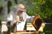 Experienced senior beekeeper making inspection in apiary after summer season — Stock Photo