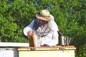 Ervaren senior imker om inspectie in bijenteelt na het zomerseizoen — Stockfoto