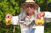 Experienced senior apiarist holding honeycombs from small wedding beehive in apiary — Stock Photo