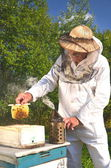 Experienced senior apiarist holding honeycomb from small wedding beehive in apiary — Stock Photo