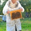 Senior apiarist and swarm of bees in apiary — Stockfoto #53935981