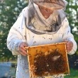 Senior apiarist and swarm of bees in apiary — Stockfoto #53936067