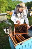 опытные старшие пчеловод, делая инспекции пасеке после летнего сезона — Стоковое фото