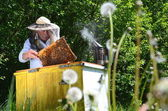 Experienced senior apiarist making inspection in apiary in the springtime — Stock Photo
