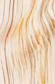 Detail of fresh cut wood  — Stock Photo