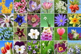 Collage - spring flowers — Stock Photo
