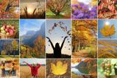 Collage - autumnal impressions — Stock Photo