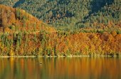 Autumnal trees, reflecting in a lake — Stock Photo