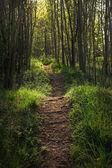 森の中で魔法の bridleway — ストック写真