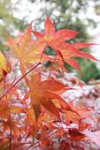 Background of maple tree branches in autumnal colors — Stock Photo