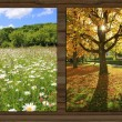 Collage - four seasons on wooden board background - VII — Stock Photo #53640493
