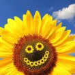 Bright sunflower with smiling face — Stock Photo #54112077