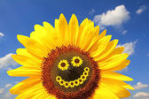 Bright sunflower with smiling face — Stock Photo