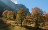 Herbstliche Bäume in den Alpen — Stockfoto