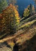 Illuminated trees in the alps — Stock Photo