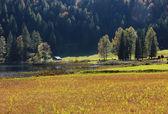 Scenic autumnal bogland in the alps — Stock Photo