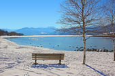 Resting bench beside birch tree, view to lake tegernsee in winte — Stock Photo