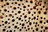Holey wooden background with  — Stock Photo