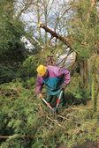 Senior con loppers, cortando ramas — Foto de Stock