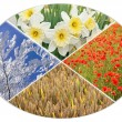Four seasons circle I — Stock Photo #69994441