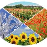 Four seasons circle IX — Stock Photo #69995665