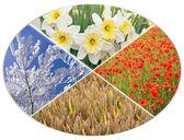 Four seasons circle I — Stock Photo