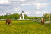 Buttercup çayır, bina kilisenin ortasında grup — Stok fotoğraf