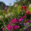 Colorful summer flowerbed in the park — Stock Photo #78887442